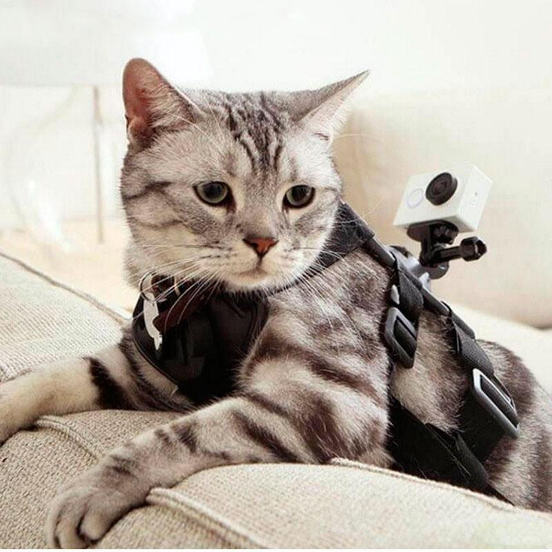 Arnés para Mascotas Yi Action - Pequeño