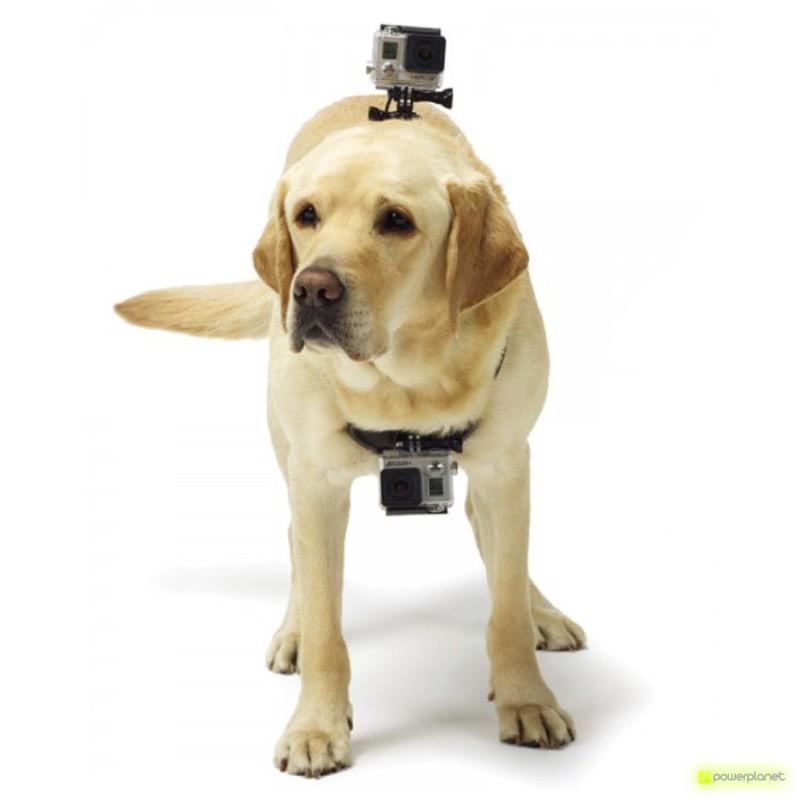 accesorio para perros y cámara, accesorio cámara perros, accesorios cámara mascotas, accesorio cámara arnés para mascotas, arnés para mascotas, arnés fetch para mascotas
